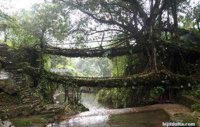 Double_Decker_Root_Bridge (6)